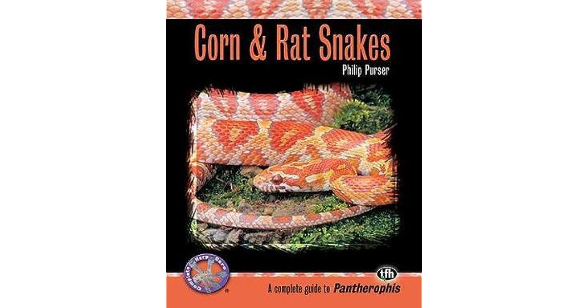Corn Rat Snakes By Philip Purser