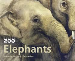 Dublin Zoo Elephants