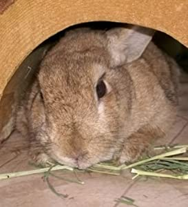 The Pet Rabbit: From Head to Feet and Everything In Between
