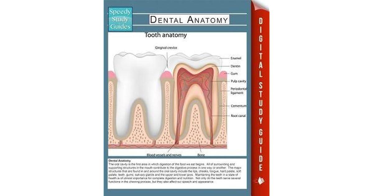 Dental Anatomy by Speedy Publishing