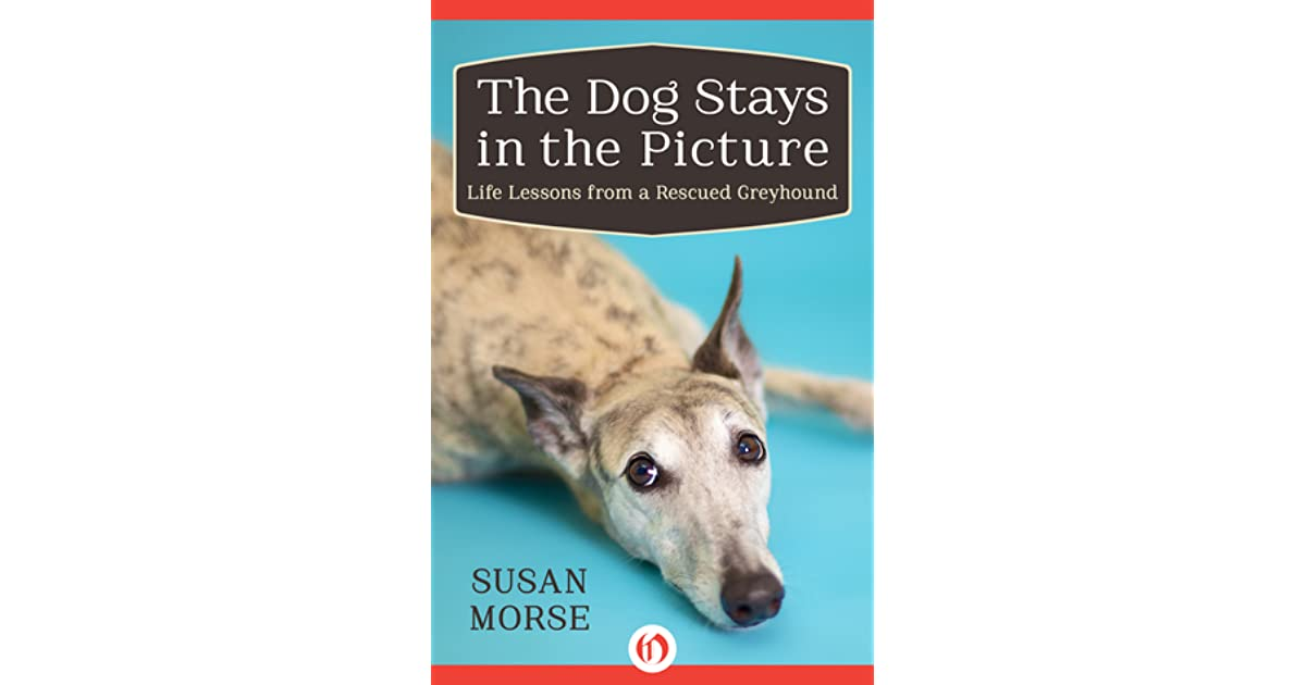 The dog stays in the picture life lessons from a rescued the dog stays in the picture life lessons from a rescued greyhound by susan morse fandeluxe Image collections