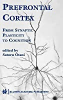 Prefrontal Cortex: From Synaptic Plasticity to Cognition