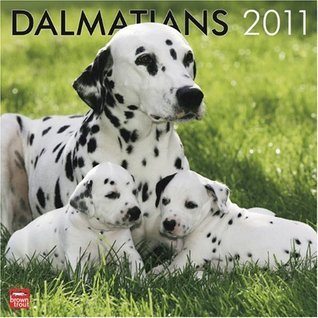 Dalmatians 2011 Square 12X12 Wall Calendar  by  NOT A BOOK
