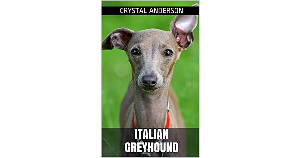 Italian Greyhound: How to Own, Train and Care for Your ...