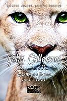 Gatos Callejeros -RELP Sidestory 2-