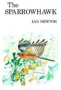 The Sparrowhawk