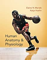 Human Anatomy & Physiology (Marieb, Human Anatomy & Physiology)