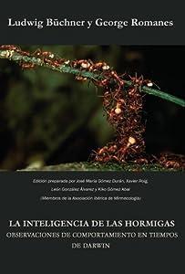 La inteligencia de las hormigas