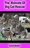 Bobcats of Big Cat Rescue: Learn about bobcats and see lots of bobcat photos.