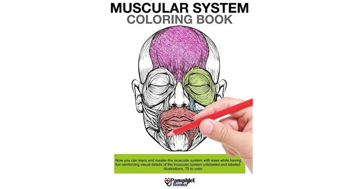 - Muscular System Coloring Book: Now You Can Learn And Master The Muscular  System With Ease While Having Fun By Pamphlet Books