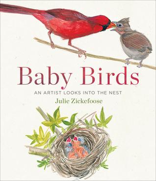Baby Birds by Julie Zickefoose