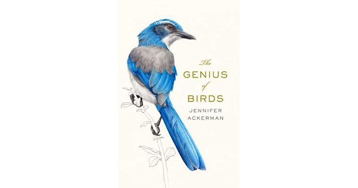 Why Bird Brain Shouldnt Be Considered >> The Genius Of Birds By Jennifer Ackerman