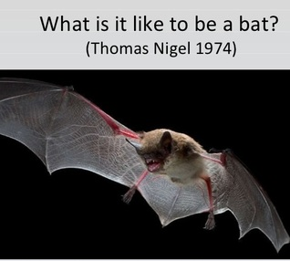 What is it like to be a bat?