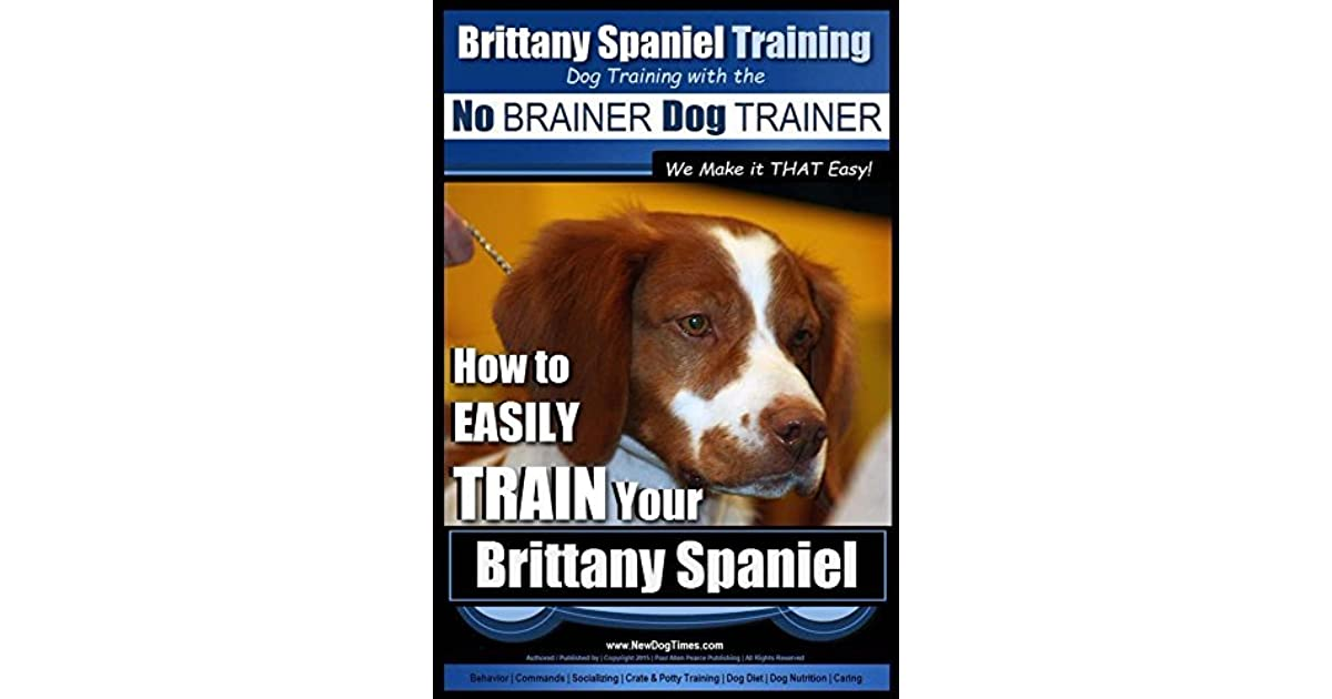 Brittany Spaniel Training Dog