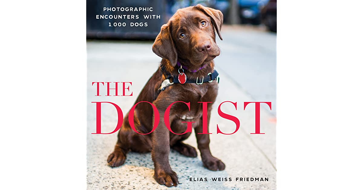 The Dogist Photographic Encounters With Dogs By Elias Weiss - Dog portrait photography shows how they hate wearing the cone of shame
