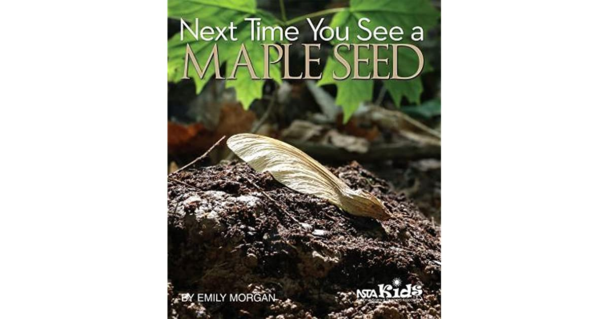 Next Time You See a Maple Seed by Emily Morgan