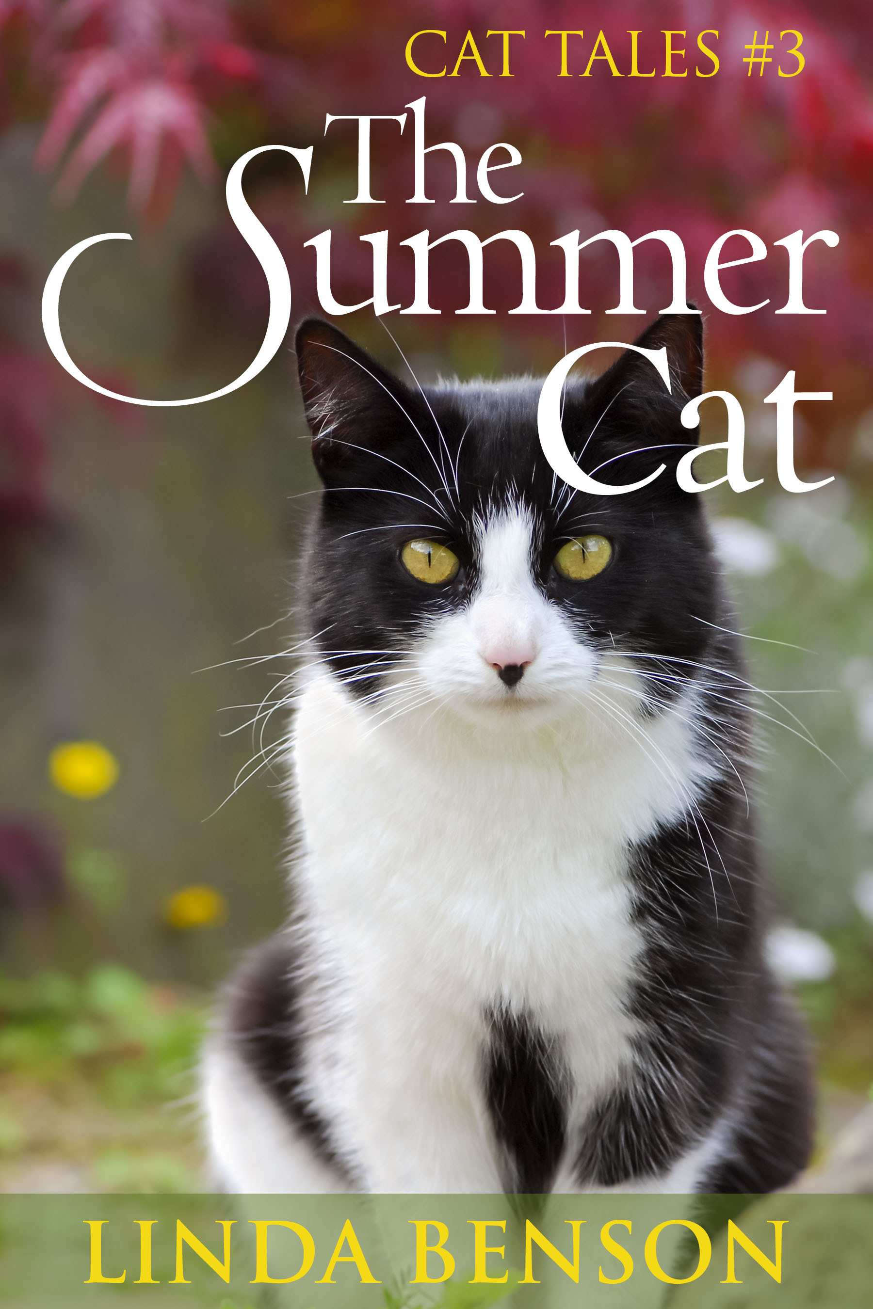The Summer Cat