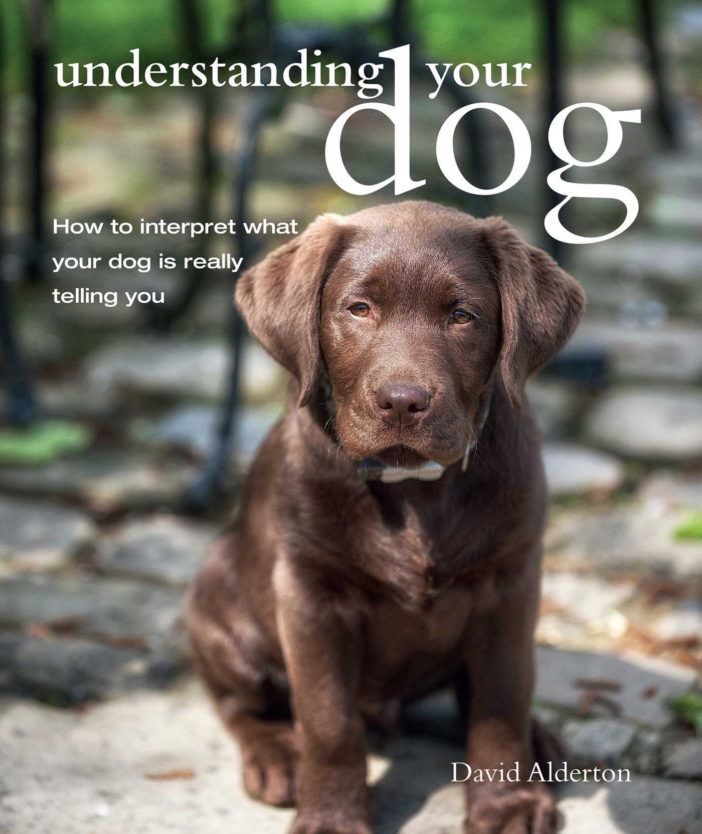 Understanding Your Dog How to interpret what your dog is really telling you