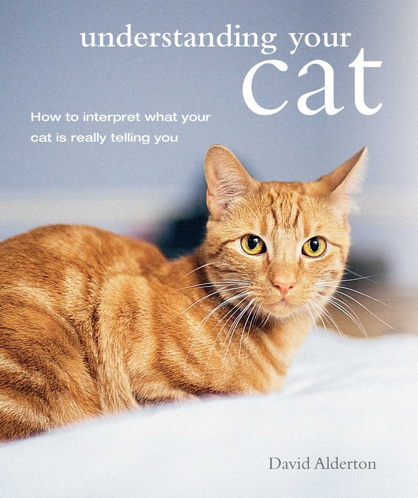 Understanding Your Cat How to interpret what your cat is really telling you