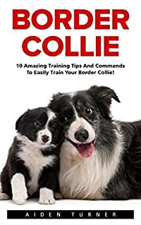 Border Collie: 10 Amazing Training Tips And Commands To Easily Train Your Border Collie! (Dog Training Guide, Border Collies, Border Collie Puppy)