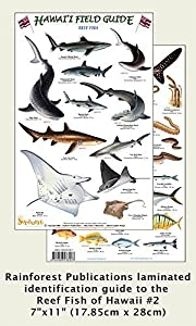 Hawaii Reef Fish #2 Identification Guide (Laminated Single Sheet Field Guide (Hawaii Field Guides) (v. 1) (English and Spanish Edition)