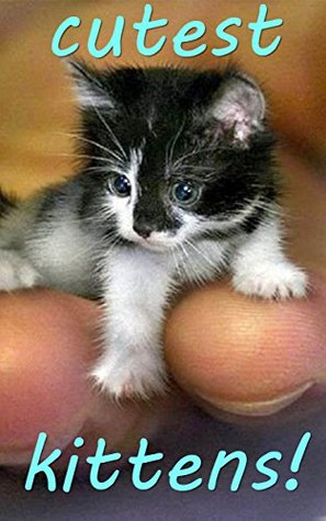 Worlds Cutest Kittens Top 100 Most Adorable Baby Kittens By Jamie Milly