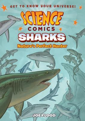 Sharks: Nature's Perfect Hunter