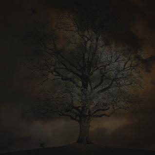 Shadows Through the Fog