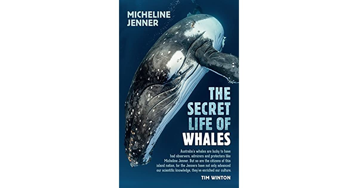 summary of the whale and the Set in brooklyn in the 1980s, the squid and the whale tells the story of a marital break-up and its impact on the children jeff daniels plays bernard, a somewhat insufferably superior literature professor and decreasingly successful novelist, married to joan (laura linney), a more successful writer but with her own insecurities.