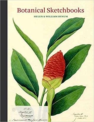 Botanical Sketchbooks by Helen Bynum