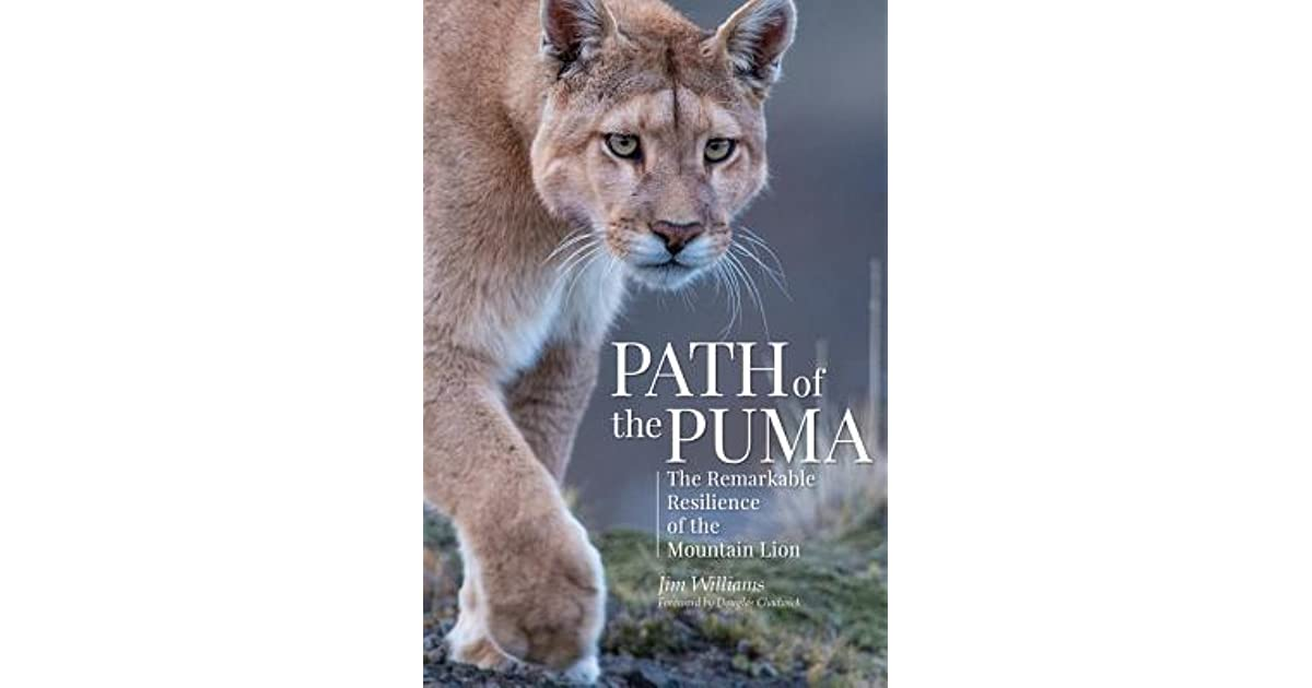 The Remarkable Resilience of the Mountain Lion Path of the Puma