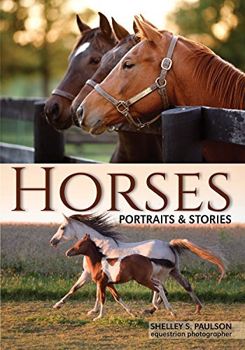 Horses Portraits & Stories