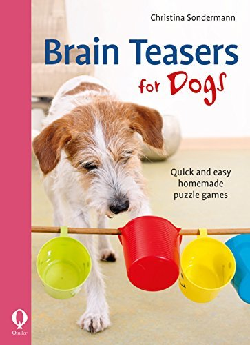 Brain Teasers for Dogs Quick and easy homemade puzzle games
