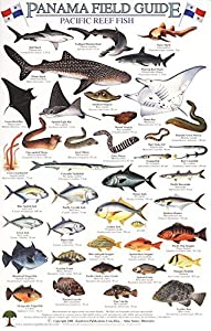 Panama Pacific Reef Fish Identification Guide (Laminated Single Sheet Field Guide)