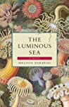 The Luminous Sea
