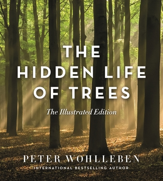 The Hidden Life of Trees: What They Feel, How They