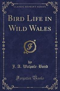 Bird Life in Wild Wales