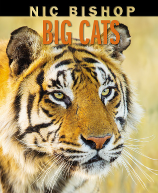 Big Cats by Nic Bishop