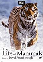 The Life of Mammals - The Complete Series [VHS]