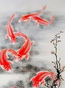 The Fish of Lijiang