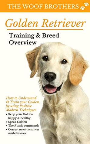 Golden Retriever Training Breed Overview How To Understand
