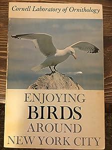 Enjoying Birds Around New York City