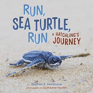 Run, Sea Turtle, Run by Stephen Swinburne