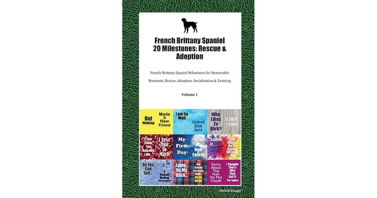 French Brittany Spaniel 20 Milestones