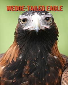 Wedge-Tailed Eagle: Amazing Facts about Wedge-Tailed Eagle