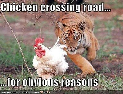 chicken Pictures, Images and Photos