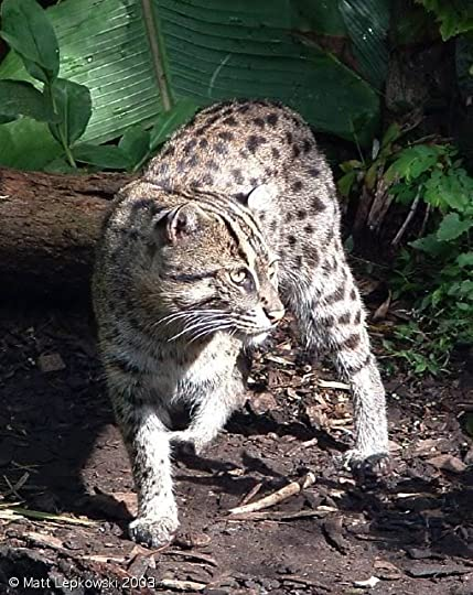 Water Cat Pictures, Images and Photos
