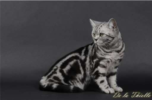 Pipper Tabby Dream Pictures, Images and Photos