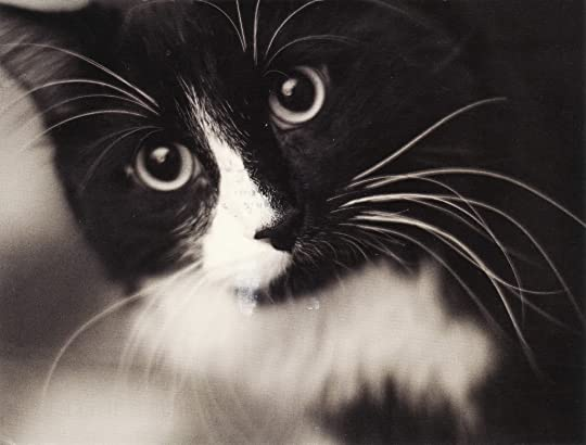 cat (in black and white)