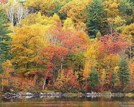 fall leaves 002